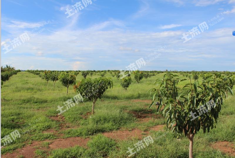 柬埔寨3万亩水浇地寻求租售合作