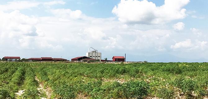 柬埔寨土地种殖投资